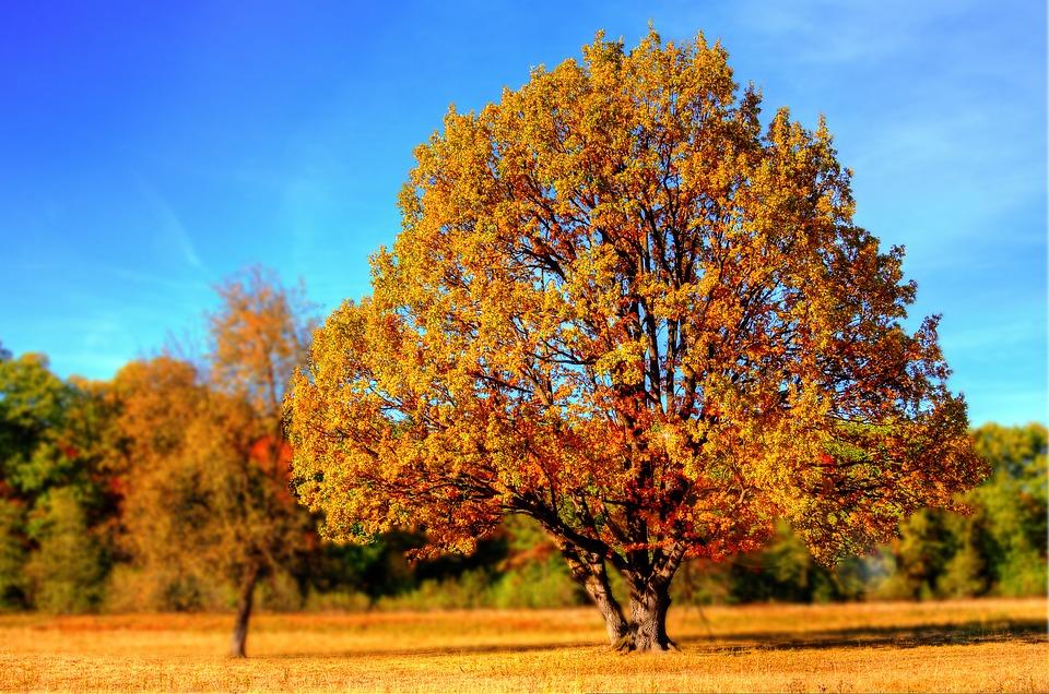 Quand commence l'automne 2017 ? Date et heure